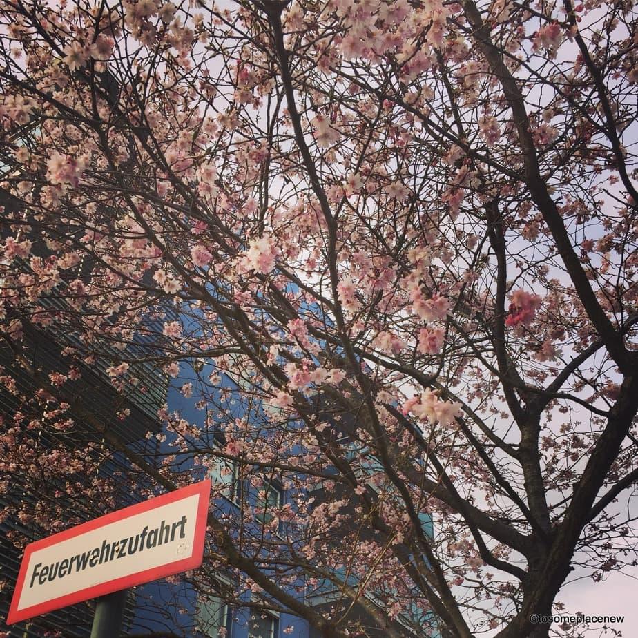 Spring time in Munich